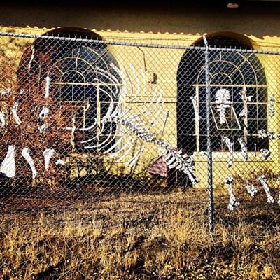 Dem Bones: Quail Lake California Fence