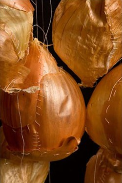 EPIDERMIS Sewn onions by Erika Diamond included in Transamerica Square exhibit