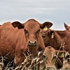 FDA changes stance on antibiotics after criticism