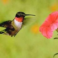 FESTIVAL: Hummingbird Festival at Reedy Creek Nature Preserve