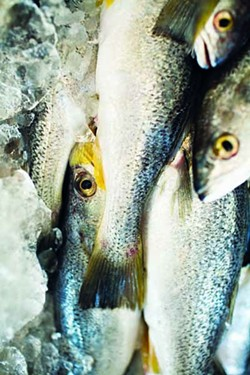 JEREMY M. LANGE - FISH TALES: North Carolina farm-raised trout