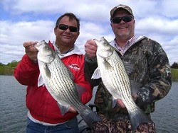 Fishermen with their striped bass. (Photo credit: HuntFishGuide.com)