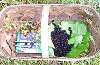 Going foraging with Heirloom's Clark Barlowe