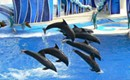 Hey, Sea World, leave them sea mammals alone