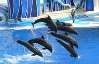 Hey, Sea World, leave them sea mammals alone