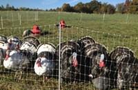 It's already time to talk turkey