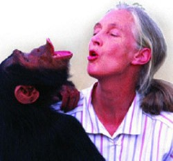 Jane Goodall's Wild Chimpanzees is still - showing at the Discovery Place Omnimax Theatre - and will remain through May 1