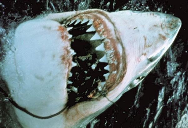 Jaws (Photo: Universal)