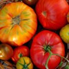 Learn to cook with tomatoes with Chef Gene Briggs