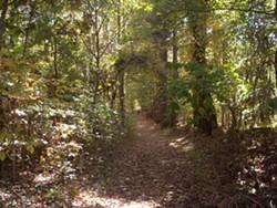03d06ddb_ribbonwalk_path.jpg