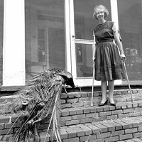 NOM DE PLUMAGE: Flannery O'Connor with one of her trademark peacocks.