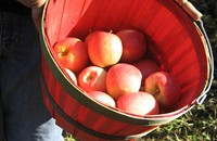North Carolina apple days are upon us already