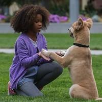 Quvenzhané Wallis in Annie (Photo: Columbia)