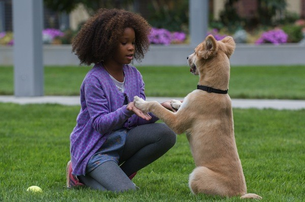 Quvenzhané Wallis in Annie (Photo: Columbia)