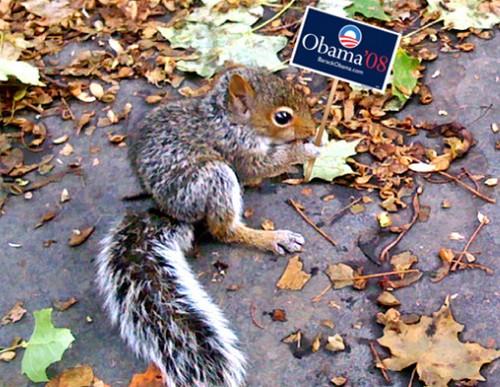 obamasquirrel.jpg