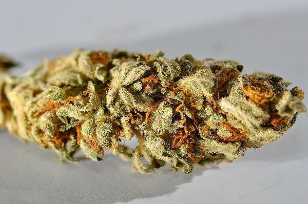 800px-Cannabis_macro.JPG