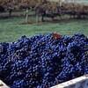 Tar Heel Wines