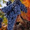 A grape by any other name: Tempranillo