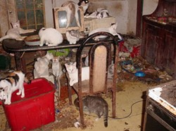 TOO MUCH OF A GOOD THING: Charlotte-Mecklenburg Animal Control officers investigate new hoarding cases a couple of times each year. - C.M. ANIMAL CONTROL