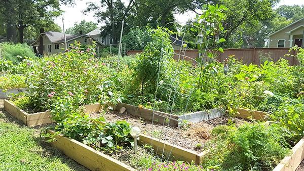 Leadbetter's backyard garden in Belmont. (Photo by Alison Leininger)