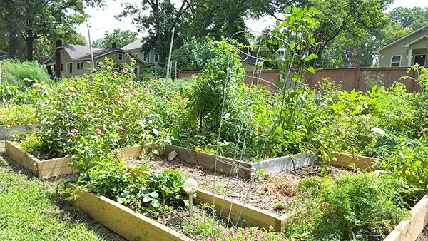 Leadbetter's backyard garden in Belmont. (Photo by Alison Leininger)