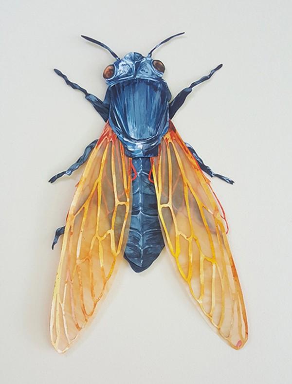 Elisa Sanchez' 'Cicadae Cutícula'