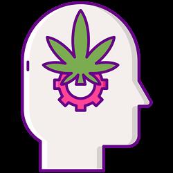 endocannabinoids.png