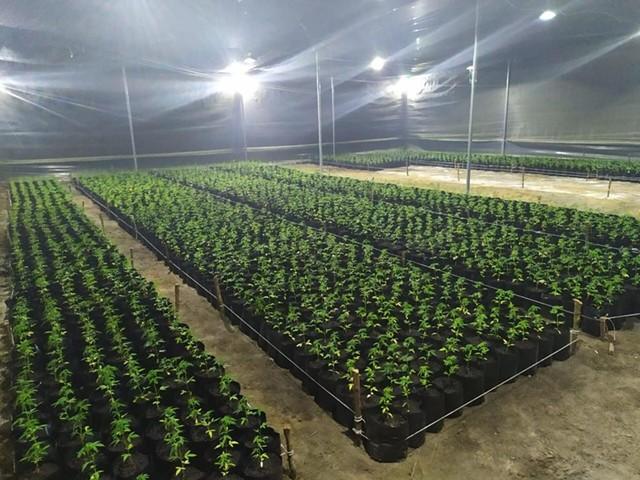 allied_greenhouse.jpeg