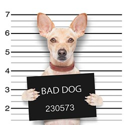 mugshot-dog-521707557_3159x3159.jpg