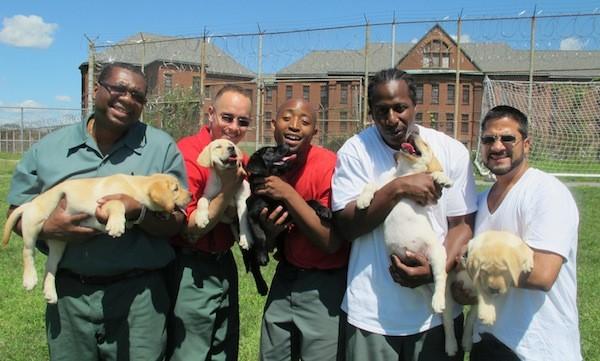 Prison Dogs (Photo: G2P2)
