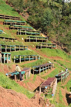 Coffee drying on a Burundi hillside. (Courtesy of Counter Culture Coffee)