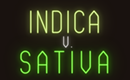 The Differences Between Sativa & Indica Cannabis Strains