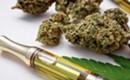 THC concentrates vs Marijuana buds