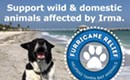 'CL' Tampa Bay Creates 'Furricane Relief' for Irma's Animal Victims