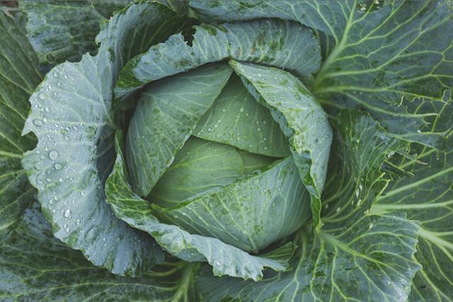 veggieworkshop_copy.png