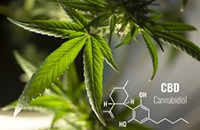 10 Things to Look for When Trying to Find the Best Online Hemp-Derived CBD Shop for You