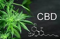 Does the extraction method affect the quality of CBD?: What's there to know?