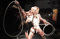 It's what's inside that counts at Discovery Place's Body Worlds