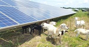 Farming Companies Grow a New Level of Sustainability