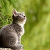 The Cat Breed Guide to Feline Anxiety: Symptoms and Treatment