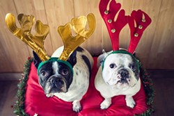 81935c3f_dog_christmas.jpg