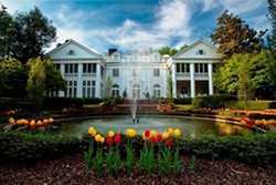 ef8d624e_duke_mansion_tulips_1_.jpg