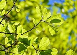 9e93a548_persian-oak-wood-3064187_640.jpg