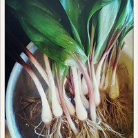 Where to find ramps while they're still available