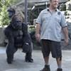 <i>Zookeeper</i>: Animal harm