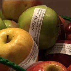 Apples with protest messages, placed in the University of Chicago provost's office.