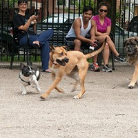 Best Dog Park for Nonjudgmental Dog Watching