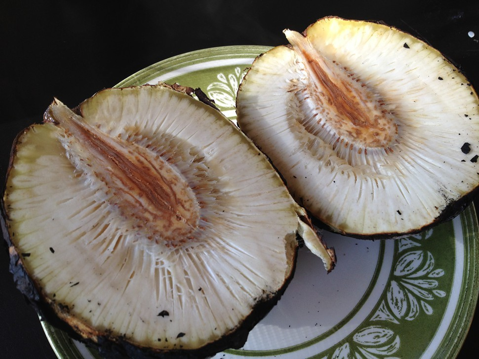 breadfruit split