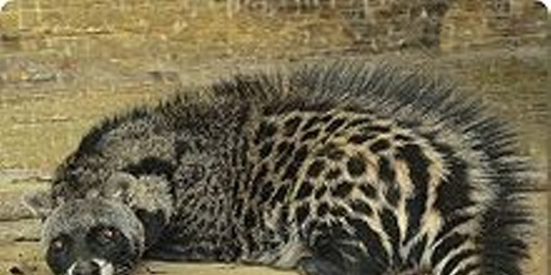 Brew your next cup of java through a civet