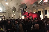 Drinking booze with elephants at the Lively Water Whiskey Festival